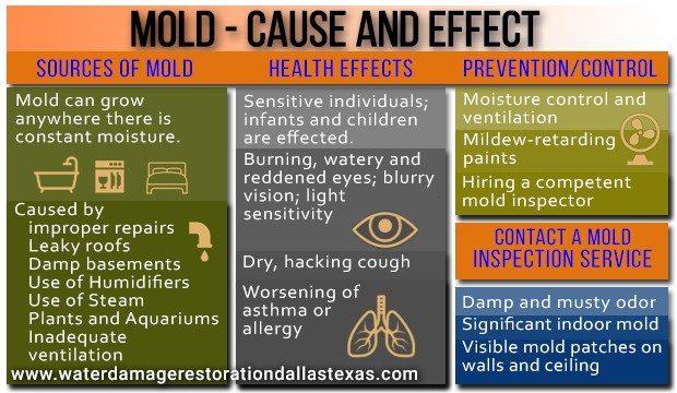 Mold, Cause and Effect
