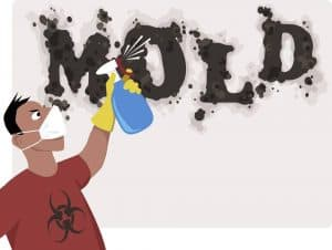 Removing mold with spray