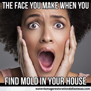 no place is safe from mold